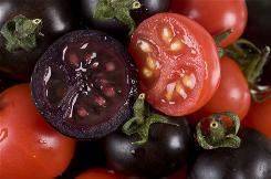 [Image: tomatoesx.jpg]