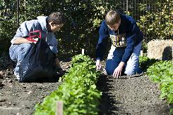 Logan Beausoleil of Gurnee, Ill., and Jordan Voigt of Bettendorf, La., both 21, pack leaves around purple turnips in their garden by their house. The students started the project for an English and geography class at Augustana College in Rock Island, Ill.