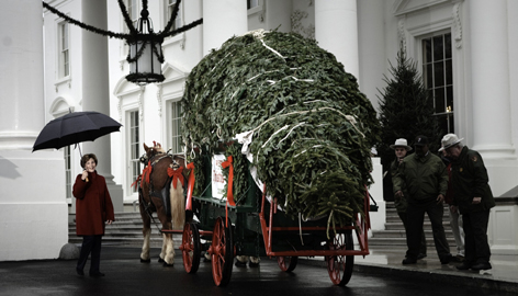 First lady Laura Bush accepts a 20-foot-tall Fraser fir tree from North Carolina outside the North Portico of the White House on Sunday in Washington, DC. The tree will be displayed in the Blue Room of the White House during the 2008 holiday season.