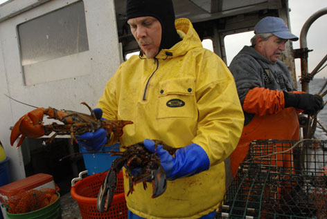 Lobsterman Bernie Feeney, 60, right, and Mike Ulevichius haul in the last of the disappointing season. Feeney was losing $2,500 a week when lobsters were abundant.