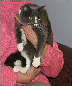 Sharon L. Peters holds her new shelter cat. She's called LilyBean for now, but not for long!