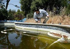 Contra Costa County (Calif.) worker Josefa Cabada inspects a foreclosed home's neglected pool, which could foster the West Nile virus.