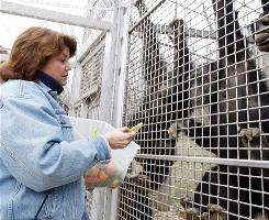 April Truitt, who runs the Primate Rescue Center in Kentucky, says she warned the Stamford, Conn., woman whose chimp critically injured Charla Nash last month about the hazards of such animals.