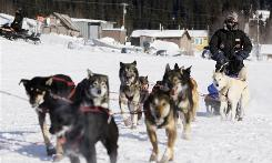 "Iditarod champion Lance Mackey drives his team into the White Mountain, Alaska, March 17, the day before winning. What makes these animal athletes ""insulin-sensitive?"" Researchers are investigating."