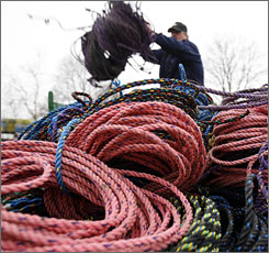 A new regulation prohibits Maine lobstermen from using the floating rope to connect their traps because whales can get tangled in it.