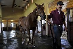 Argentine veterinarian Felix Eduardo Crespo, 53, walks a horse at the Lechuza Caracas horse stables in Wellington, Fla. The horses from the Venezuelan-owned Lechuza polo team began crumpling to the ground shortly before a match after being given bad medicine.