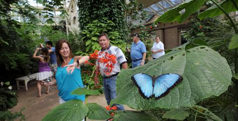 Becky and Harvey Huffstetler, of Atlanta, Ga., pass by a Blue Morpho butterfly in the Cecil B. Day Butterfly Center at Callaway Gardens, in Pine Mountain, Ga.