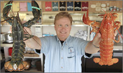 Nathan Nickerson, owner of Arnold's Lobster and Clam Bar in Eastham, Mass., holds up a  rare yellow lobster, right, and a normally pigmented one, left.