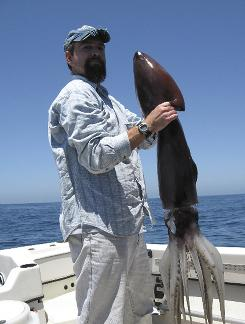 John Hyde, a marine biologist with the National Marine Fisheries Service, holds a Humboldt squid, also known as a jumbo flying squid,  caught off the San Diego coast. The rare squid have returned to the area wreaking havoc on local divers.