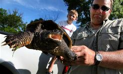 Eric Eckhardt holds a turtle he caught recently in Sheffield, Iowa, as his son, Cooper, 10, watches. A conservation group wants Iowa to end the unlimited commercial harvesting of turtles.