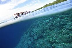 Bunaken Island: Rising water temperatures, sea levels and acidity are threatening to destroy the vast region of southeast Asia known as the Coral Triangle, also called the ocean's answer to the Amazon rainforest.