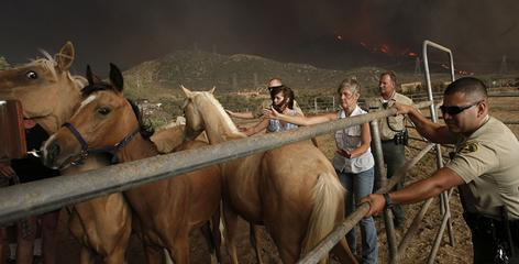 Los Angeles County sheriff's deputies and residents help evacuate horses as fires burn the hills above Acton, Calif.
