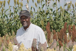Gebisa Ejeta stands in a field of sorghum.