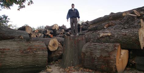 Doug Blonsky, president of the Central Park Conservancy, stands among a pile of dead trees collected after a brief but destructive August windstorm.