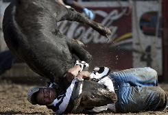 Louisiana State Penitentiary prisoner Bradley Brown flips a calf during bulldogging competition Sunday in Angola, La. The rodeos are held every Sunday in October and one weekend in April.