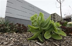 Rush University Medical Center keeps this rooftop garden over the loading dock of the new central energy plant in Chicago to help insulate the building and reflect heat.