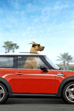 An image from the pet-action movie Marmaduke, which will be released in June.