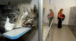 Deanna Weaver checks out the cats that are up for adoption Dec. 23 at the Salt Lake County Animal Shelter.