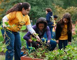 First lady Michelle Obama and local students from Bancroft Elementary School and Kimball Elementary School harvest vegetables in the garden on the South Lawn of the White House Oct. 29.