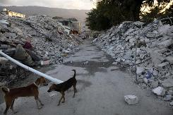 Stray dogs stand between mounds of rubble from the Jan. 12 earthquake in Port-au-Prince. Animal welfare groups arrived in Haiti Saturday to help protect quake victims by vaccinating stray dogs and maintaining the health of livestock.