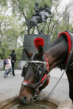 A carriage horse named Hero takes a drink in this 2005 photo near the statue of Cuban independence hero Jose Marti outside Central Park in New York.