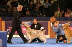 Desmond J. Murphy judges a sporting group at a dog show.