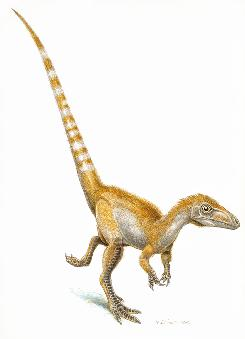 An artist's rendering shows a sinosauropteryx sporting its orange and white striped tail. Scientists have for the first time confirmed color in a dinosaur. Don't think purple Barney, but reddish-orange Conan O'Brien.