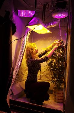 Dale Sky Clare, executive chancellor of Oaksterdam University, demonstrates lighting options with a silk marijuana plant last month in Los Angeles.