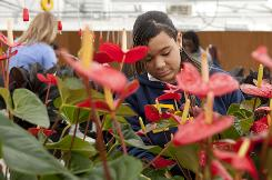 FFA member Cierra Fierce, 16, tends to plants in the greenhouse behind Clyde C. Miller Career Academy in St. Louis.