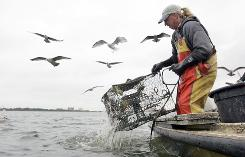 Joe Palmer, owner of Joey's Crab Co., pulls up a crab trap on Lynnhaven inlet in Virginia Beach last fall.