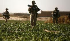 U.S. Marines walk in a poppy field in a farmland area on the northeastern outskirts of Marjah on Thursday.