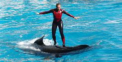 Whale trainer Dawn Brancheau performs at SeaWorld Adventure Park in Orlando in 2005. Brancheau was killed in an encounter with a killer whale at the Shamu Stadium on Wednesday.