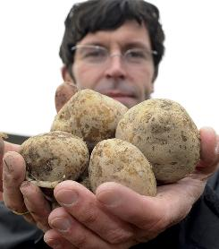 "Andreas Heise of the German company BASF presents a handful of genetically manipulated ""Amflora"" potatoes prior to planting a test field near Buetow, northern Germany. The European Commission on March 2, 2010, authorized the cultivation of the genetically modified potato, the first such green light for 12 years."