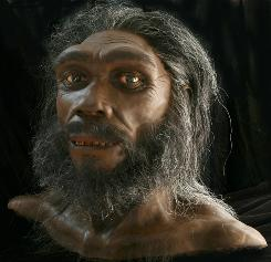 The owner of a 40,000-year-old pinky bone may have belonged to an archaic human species known only from fossils such as Homo heidelbergensis, shown as a bust above, or Homo erectus, or a completely unknown pre-human species.