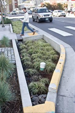 A series of planters in downtown Portland absorbs large amounts of rainwater before it can reach the sewer.