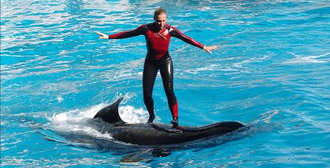 Whale trainer Dawn Brancheau, pictured performing in 2005, was killed in an accident with a killer whale named Tilikum at SeaWorld Adventure Park in Orlando on Feb. 24.