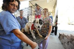 Veterinarian Stacie Wadsworth, left, helps unload a dog from the transport van at the Humane Alliance Spay/Neuter Clinic in Asheville, N.C.