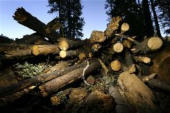 Harvested trees in Sequoia National Forest are stacked July 2004 in an area burned during the massive McNally fire two years before in the Sierra Nevada Mountains of California. Man-made causes of forest loss include logging and wildfires caused by people. Natural causes would include natural wildfires and storm damage.