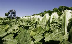 Romaine lettuce sold under Freshway Foods and Imperial Sysco brands has been recalled from 23 states and Washington, D.C., due to E. coli concerns.