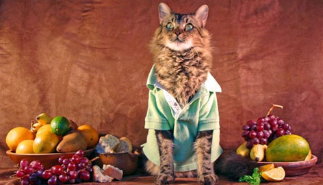"""I'm not the kind of person who dresses up animals,"" says Joann Biondi, but her cat Lorenzo used to steal and scatter her clothing. One day she said, ""If you're that enchanted with my clothes maybe you should just wear them,"" and slipped a tank top over his head. ""He stuck his chest out,"" and began preening. The rest is history."