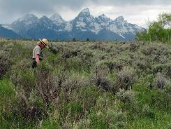 Grand Teton National Park spokeswoman Jackie Skaggs strolls a section of state land in the park.
