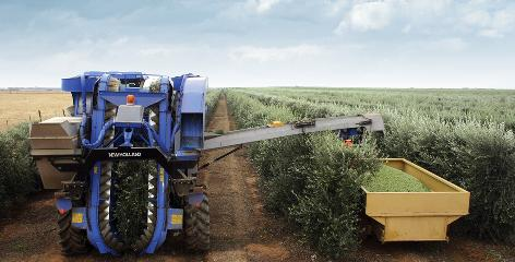 "This year, the United States will surpass France in the production of extra virgin olive oil. The upset comes because a new method of growing the prized fruit, called ""super high density planting,"" is sweeping California's olive orchards.  Here is a harvesting machine."