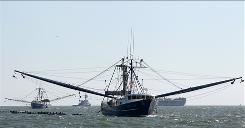 A shrimp boat pulls an oil retention boom near Dauphin Island, Ala., on Sunday to collect oil from the Deepwater Horizon disaster.