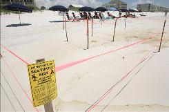 A sea turtle nest is roped off Wednesday at Seashore Beachwalk in Fort Walton Beach, Fla.