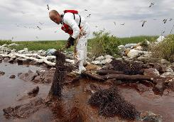 A worker picks up blobs of oil with absorbent snare on Queen Bess Island at the mouth of Barataria Bay near the Gulf of Mexico in Plaquemines Parish, La., in June.