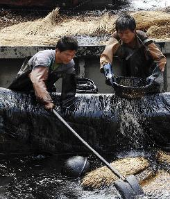 Men scoop up oil in China's Liaoning province after a pipeline exploded last month.