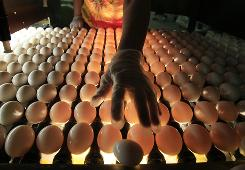 Required safety procedures changed July 9 for large egg producers.