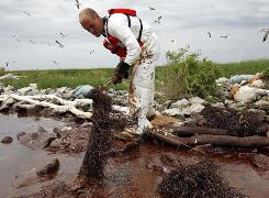 A worker picks up an absorbent snare filled with oil June 4 on Queen Bess Island at the mouth of Barataria Bay in Plaquemines Parish, La.