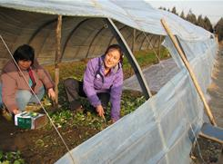 Shi Yan, right, says she was inspired to start Little Donkey Farm when she worked for six months in 2008 at a community-supported agriculture project in Madison, Minn.