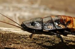 The Bronx Zoo is running a unique fundraiser allowing the public to name their huge roaches in honor of their sweetheart as an out-of-the-ordinary gift for Valentines Day.